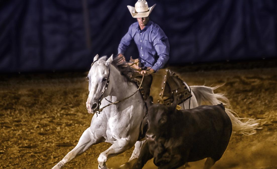 man on grey horse circling black calf